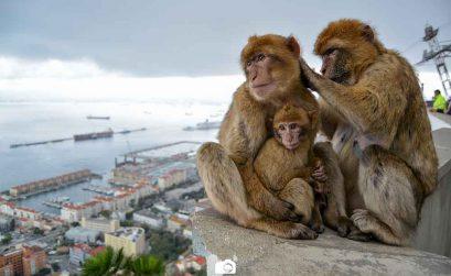 La Guarida de los Monos en Gibraltar